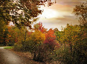 Autumn Landscape Digital Art - Autumn Hues by Jessica Jenney