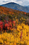 Forested Posters - Autumn in the Wasatch Mountains Poster by Utah Images