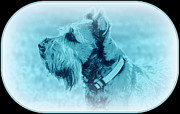 Schnauzer Art Photos - Bearded Dog by Mickey Harkins
