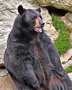 Mary Almond - Black Bear