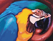 Christopher Fresquez - Blue Macaw