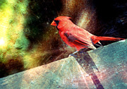 Cardinal Mixed Media - Cardinal  by Elaine Manley