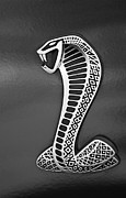 Cobra Photo Prints - Cobra Emblem Print by Jill Reger