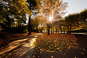 Fall Grass Posters - Colorful fall autumn park Poster by Michal Bednarek