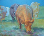 Moo Originals - Cows  by Mike Jory