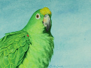 Amazon Parrot Paintings - Dee Dee by Lauren  Butare Smith