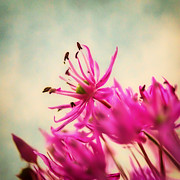 Pink Floral Photos - Dream by Kristin Kreet