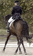 Dressage Drawings - Dressage Horse Portrait by Olde Time  Mercantile