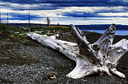 Storm Digital Art Posters - Driftwood on Beach Poster by Thomas R Fletcher