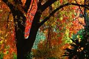 Tam Ryan - Fall Color