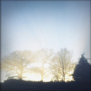 Oak Prints - Foggy morning Print by Les Cunliffe