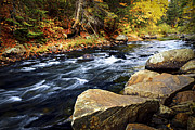 Autumn Foliage Prints - Forest river in the fall Print by Elena Elisseeva