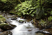Stream Framed Prints - Forest stream  Framed Print by Les Cunliffe
