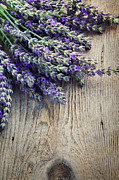 Mythja Prints - Fresh lavender Print by Mythja  Photography