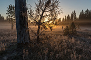 Frost Photos - Frosty Meadows by Scott Warner
