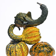 Variation Art - Gourds and pumpkins by Bernard Jaubert