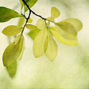 Green Foliage Metal Prints - Green Foliage Series Metal Print by Priska Wettstein