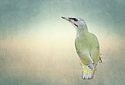 Woodpecker Mixed Media - Grey-headed Woodpecker by Heike Hultsch