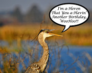 Gray Heron Posters - Happy Heron Birthday Card Poster by Al Powell Photography USA