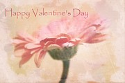 Gerber Daisys - Happy Valentines Day by Cathie Tyler