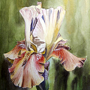 Christmas Flower Paintings - Iris Painting by Irina Sztukowski