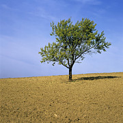 Plough Photos - Isolated tree by Bernard Jaubert