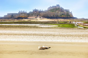 Seagull Photo Prints - Jersey - Elizabeth Castle Print by Joana Kruse