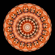 Symmetry Posters - Kaleidoscope Anatomical Illustrations Seriesi Poster by Amy Cicconi