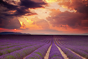 Provence Photos - Lavender Sunset by Brian Jannsen