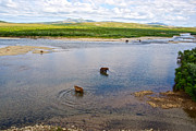 Lay Digital Art - 3-LAY OF LAND Grizzly Bears in Moraine River in Katmai National Preserve-AK by Ruth Hager