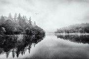 Reeds Photos - Loch Ard by John Farnan