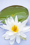 Waterlily Photo Framed Prints - Lotus flower Framed Print by Elena Elisseeva