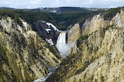 Grand Canyon Photo Metal Prints - Lower Falls from Artist Point Yellowstone National Park Metal Print by Shawn OBrien