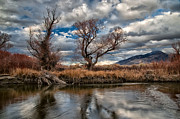 River Framed Prints - Lower Owens River Framed Print by Cat Connor