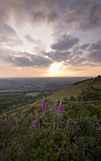 Foxglove Flowers Photos - Malvern Hills by Angel  Tarantella
