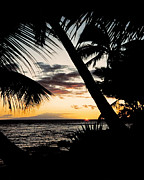 Palms Posters - Maui Sunset Poster by J D Owen