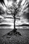 Ansel Adams Prints - Millarochy Bay Tree Loch Lomond Print by John Farnan