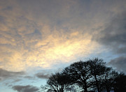 Oak Prints - Morning sky Print by Les Cunliffe