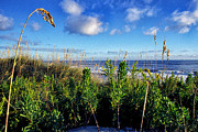 Sea Oats Prints - Nags Head Morning Print by Thomas R Fletcher