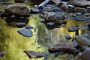 Tam Ryan - Oak Creek Reflection