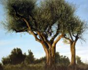 Photorealistic Painting Posters - Olive Trees Poster by Thomas Darnell