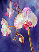 Watercolor Prints - Orchid Print by Irina Sztukowski