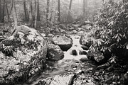 Rushing Prints - Otter Creek Wilderness Print by Thomas R Fletcher