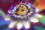 Passionflower Framed Prints - Passion Framed Print by Dirk Czarnota