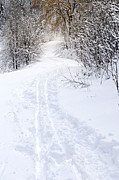 Ski Photos - Path in winter forest by Elena Elisseeva