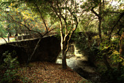 Calming Posters - Pedestrian Bridge And Strawberry Creek  . 7D10152 Poster by Wingsdomain Art and Photography