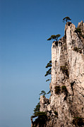 Fototrav Print - Pine trees on Huangshan...