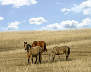Yearling Photo Posters - Plains Horses. Poster by Tony Weatherman