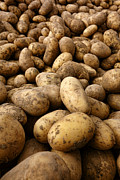 Local Food Photos - Potatoes by Olivier Le Queinec