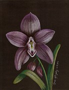 Cyndi Kingsley - Purple Orchid